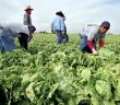 0409-cmexico-immigrants-mexico-harvest.jpg?alias=standard_600x400