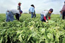 0409-cmexico-immigrants-mexico-harvest.jpg?alias=standard_600x400
