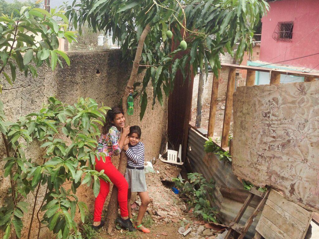 La mata de mango que sembraron en el porche y las niñas no paran de comer mango verde.